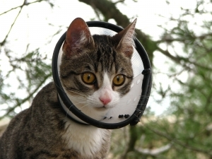 while a cat has nine lives, yahoo can't afford to be a…