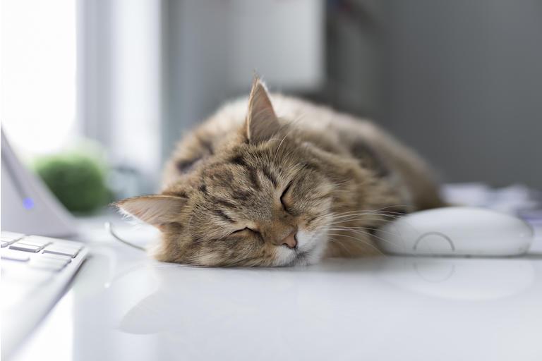 Little cat sleeping on desk near computer mouse