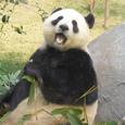 Chinawatcher