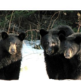 The Three Bears Investments