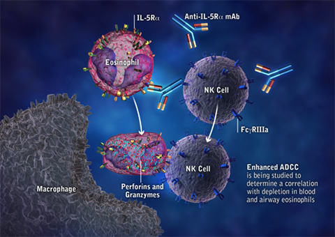 Benralizumab (MEDI-563): Mechanism of Action: anti-IL-5Rα