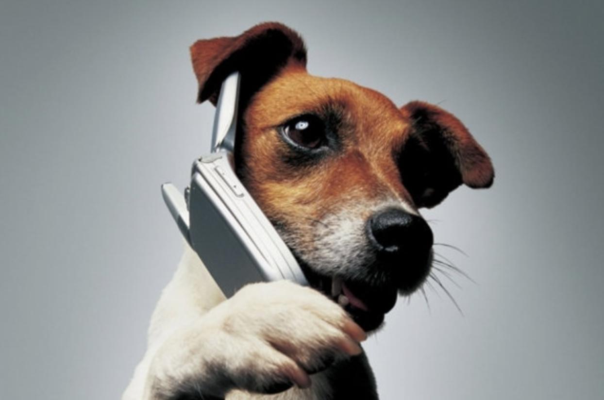 Картинки собаки с телефоном
