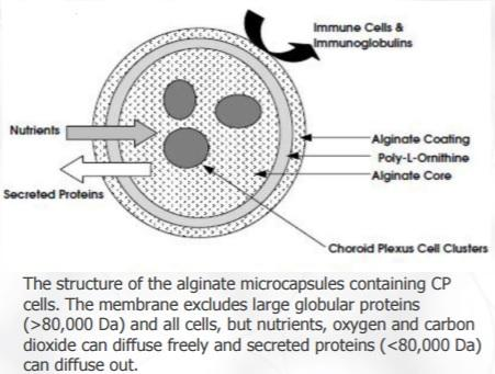 NTCELL microcapsule