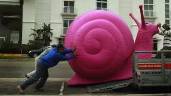 Stagnation Snail