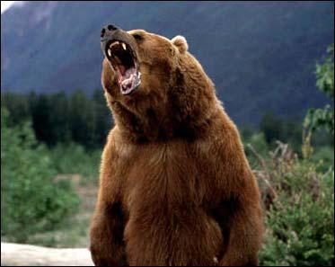 Image result for roaring bear