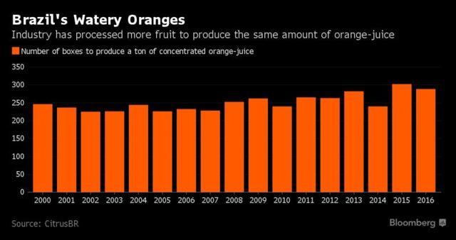 Brazils watery oranges