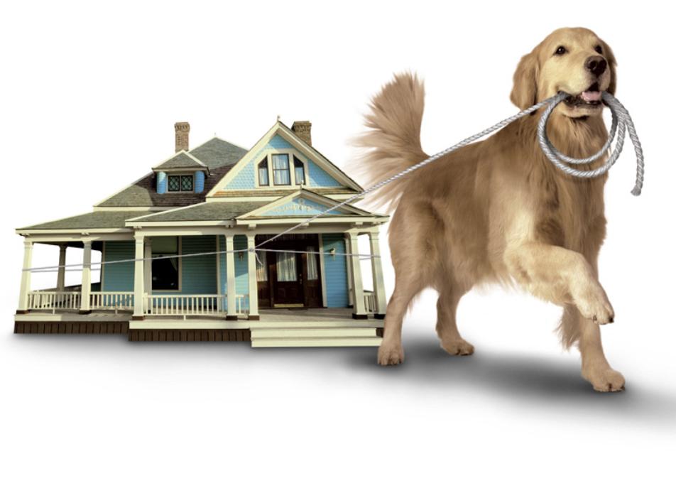 Dog Hero Uniti Projects Gest Gains