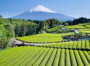 Mount Fujiyama Image