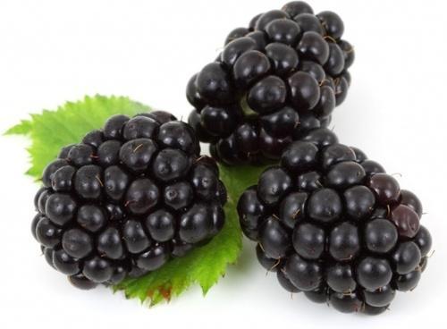 Blackberry shares up after beating Q2 estimates
