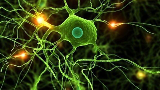 PrudentBiotech.com ~ Neurons