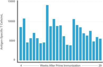 (Long-lasting immune response using heterologous prime-boost immunotherapy+anti-CTLA4)