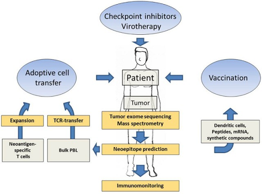 (Various forms of neoantigen-based immunotherapies using patient-specific tumor sequencing data, source )