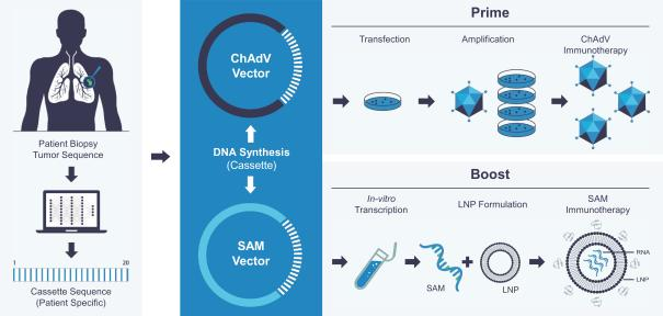 (Prime and Boost Immunotherapy Construction)