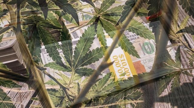 Top Marijuana Stocks Offering New Opportunities For