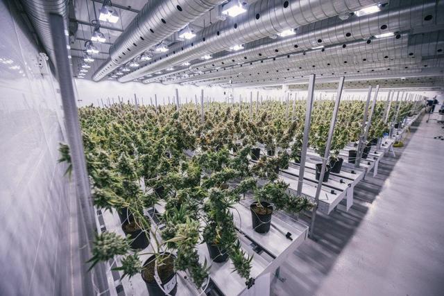 Canopy Growth Grow-Op