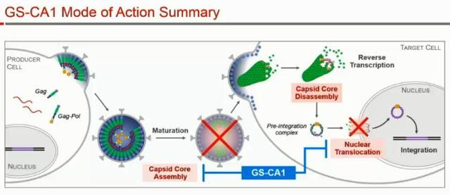 Image result for capsid inhibitor hiv