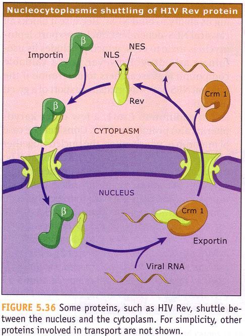 http://www.biology.ualberta.ca/people/mike_harrington/images/biol201/images/rev.jpg