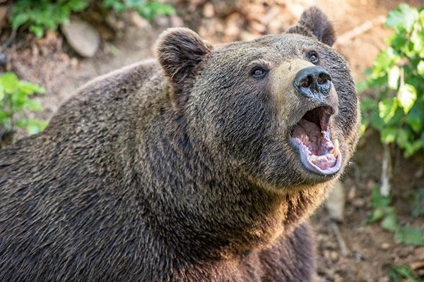 How to Face the Next Bear Market with Confidence