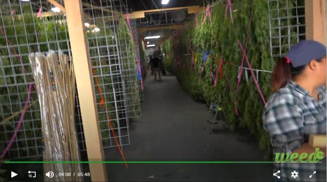 PNTV California Greenhouse Drying Racks