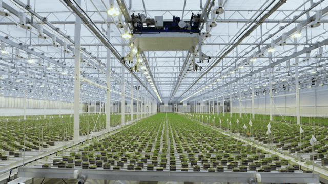 Aurora Cannabis Will Be In Distress As Oversupply Crushes Its Market
