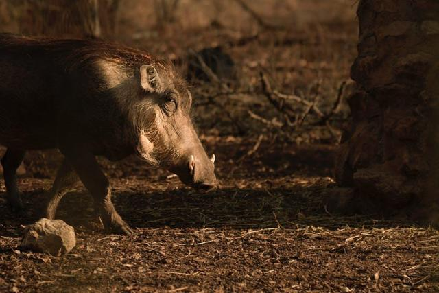 African Swine Fever And U.S.-China Agricultural Deal Make For A Bullish Meat Opportunity