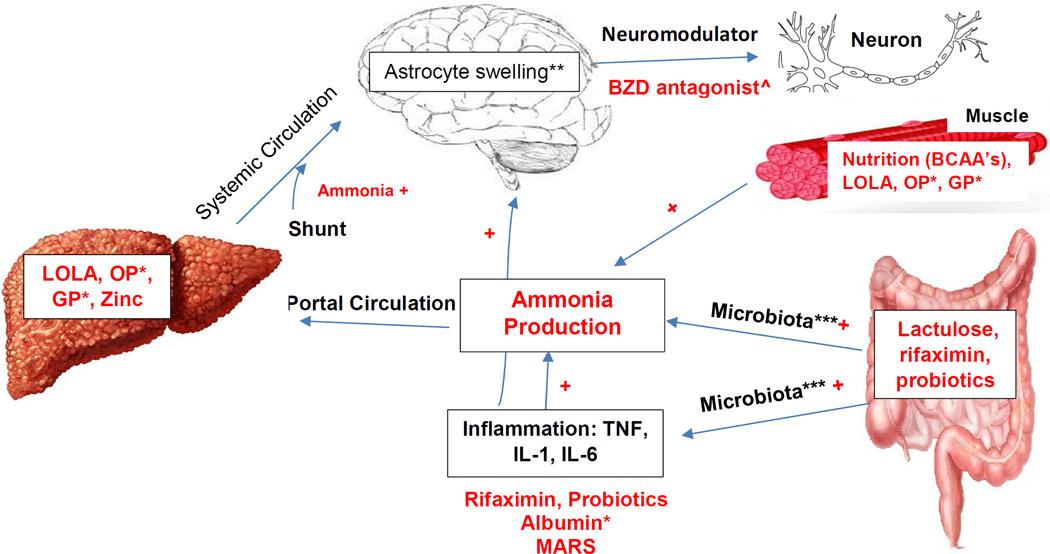 Axcella Health And AXA1655 In Hepatic Encephalopathy