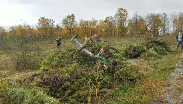 A hemp farmer blissfully jumps into a pile of hemp. Photo by Meilin Quinn.
