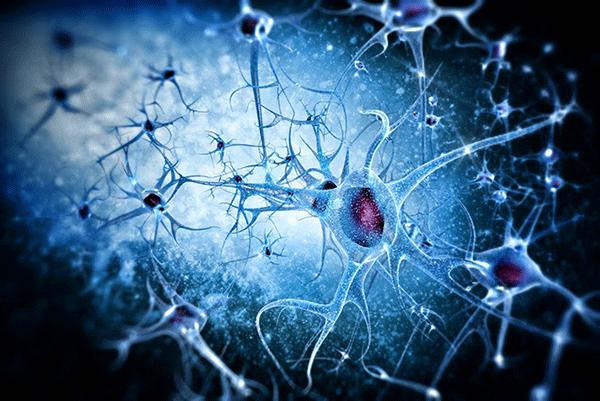 PrudentBiotech.com ~ Biotech Stocks - Brain Neurons