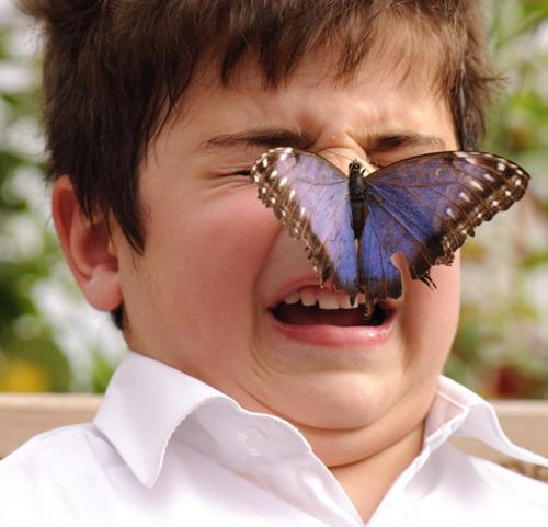 Image result for retarded butterfly
