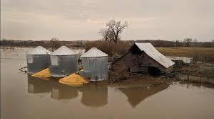 Grain spilled from bins into floodwaters