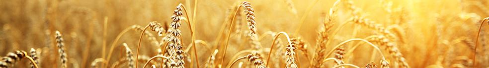 Grain, Oilseed Prices Dance To A New Global Tune