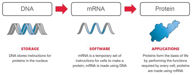 moderna: mRNA Drugs. mRNA Transcription and Translation