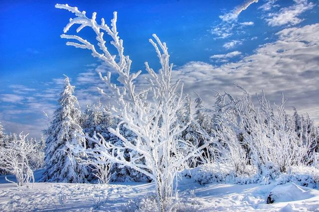 https://pixabay.com/photos/snow-winter-frost-cold-frozen-ice-3143776/