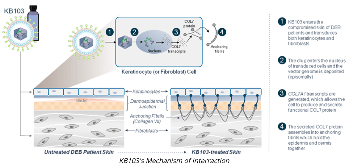 Krystal Biotech: KB-103 Sprints To Become The First Approved Topical Gene Therapy For Skin Disease