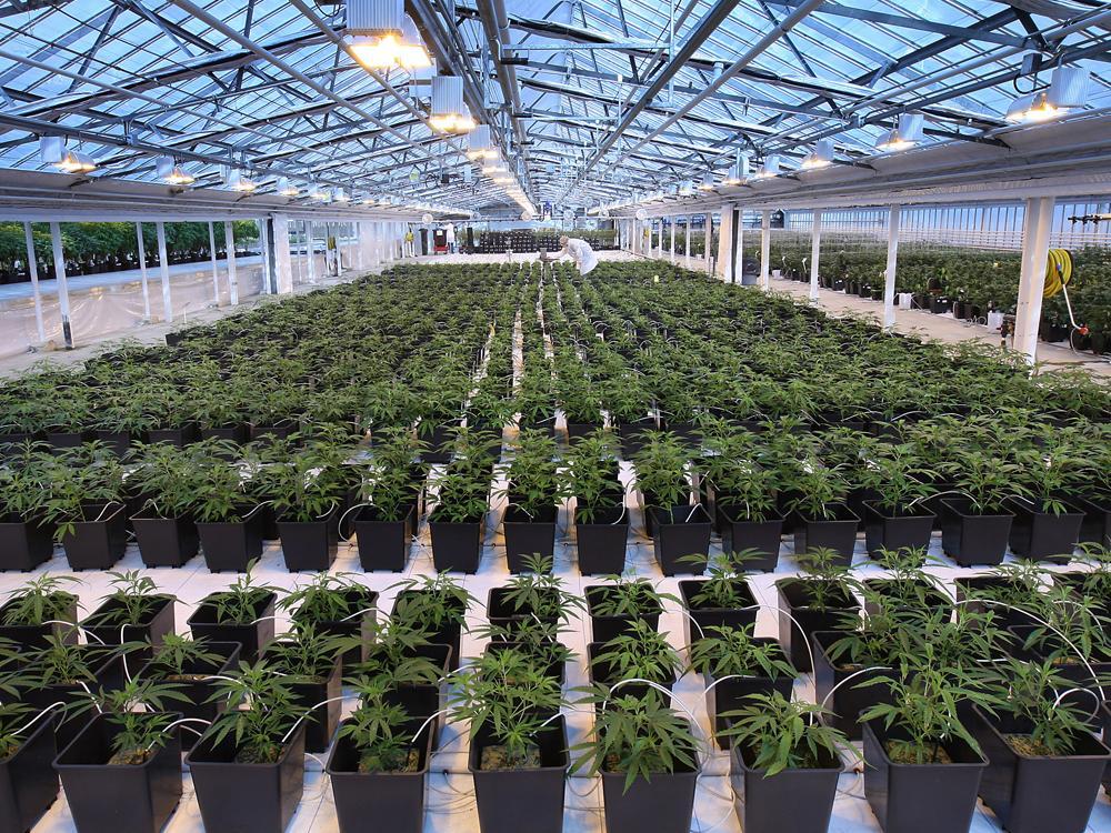 Canopy: 4 Positive Catalysts Ahead