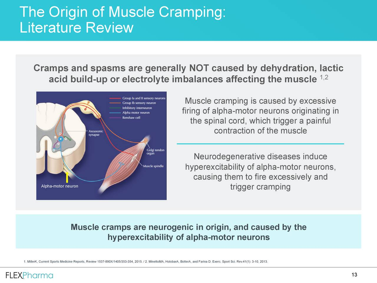 muscle spindle essays